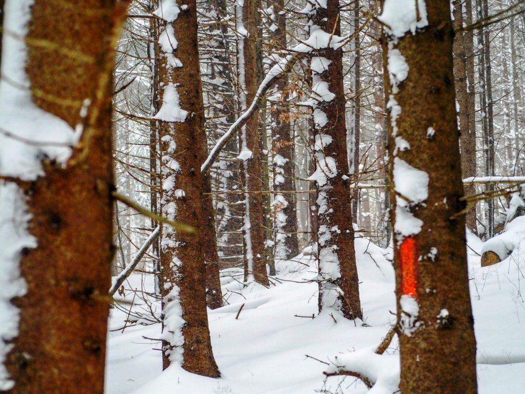 copaci in zapada